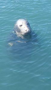 seal-posing