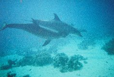 dolphinshurg